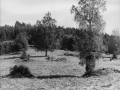 0488 Torpen vid Hultasjön
